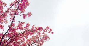 Virágzó fa tavasz sess.hu